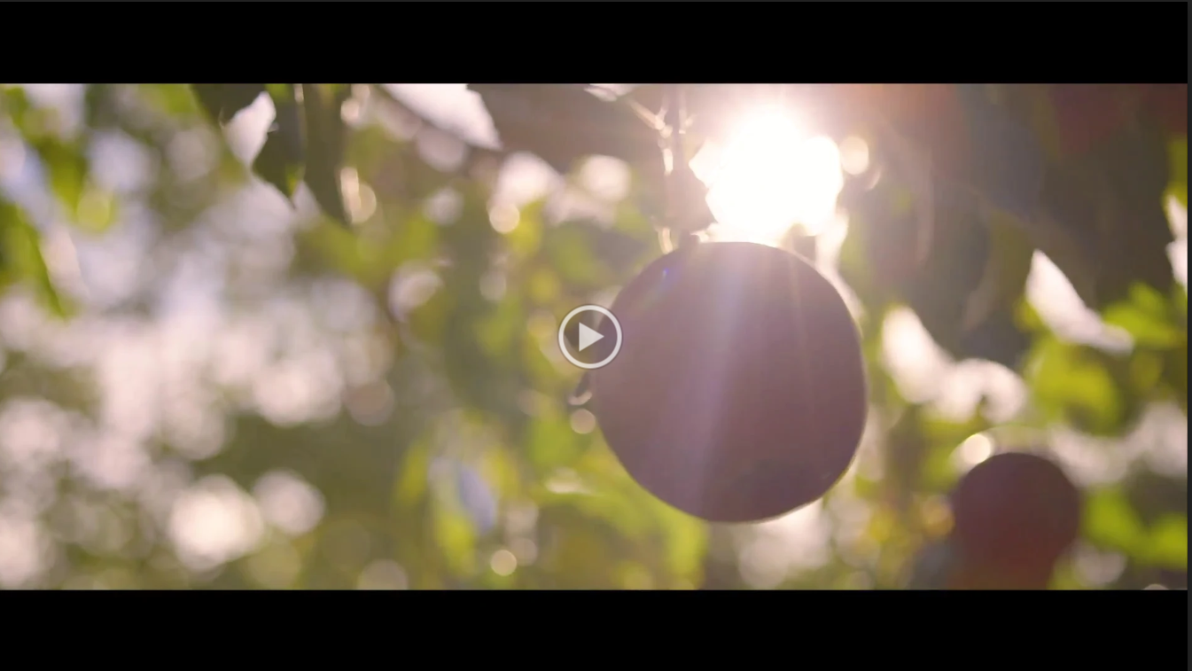 Vidéo New Holland Coronavirus